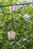 Tree with books Stock Images