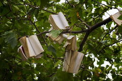 Tree with books. Tree which had some books attached of his branches Stock Image