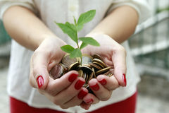 Tree born of coins in the hands Stock Photo