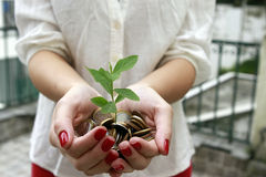 Tree born of coins in the hands Stock Photography