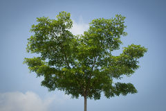 Tree. In botany, a tree is a perennial plant with an elongated stem, or trunk, supporting branches and leaves in most species. In some usages, the definition of Stock Image