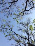 Tree from bottom view,background nature Stock Photos
