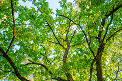 Tree bottom view. Low angle Royalty Free Stock Photography