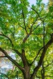Tree bottom view. Low angle Stock Image