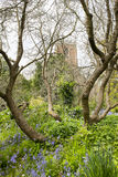 Tree boughs and St George Church Royalty Free Stock Photography