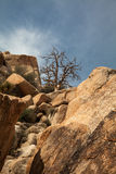 Tree and Boulders Royalty Free Stock Images