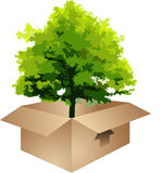 Tree in a box Stock Photography