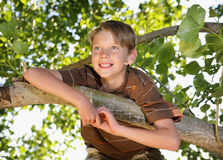 Tree Boy. Happy young boy sitting in the branches of a tree and smiling Royalty Free Stock Photos