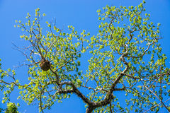 Tree brabch on sky Royalty Free Stock Image