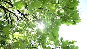 Tree brach swinging on wind. Tree branch and leafs swinging on wind stock video footage
