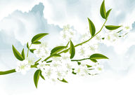 Tree Branch. With Green Leaves Royalty Free Stock Photography