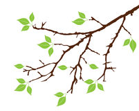 Tree branch. Illustration of a tree branch with green leaves stock illustration