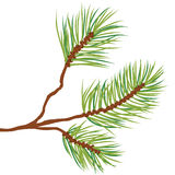 Tree branch vector. Illustration of fir tree branch isolated on white + vector eps file stock illustration