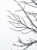 Tree branch Stock Images