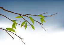 Tree Branch. Branch of fruitful Tree , autumn is come Royalty Free Stock Images