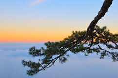 A tree branch above the clouds at sunset. stock images