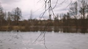 Tree branch against the background of a pond with snow stock video footage