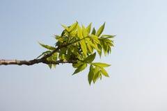 Tree branch Stock Photos