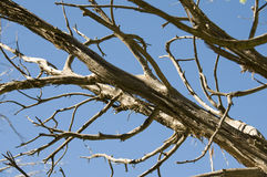 Tree branch against blue sky. Royalty Free Stock Images