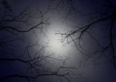 Tree branch against night sky. The mysterious mood that very scary stock images