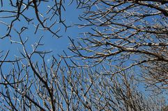 Tree branch against sky. Beautiful in the nature royalty free stock photography