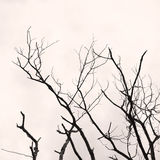Tree branch without any leaves Royalty Free Stock Image