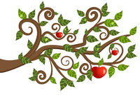 Tree branch from an apple Stock Photography