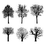 Tree Branch Arid Black Silhouettes Nature Forest Vector Illustration. Design royalty free illustration