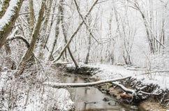 Tree branch as bridge Stock Photo