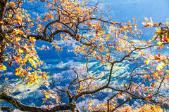 Tree branch in autumn Royalty Free Stock Images