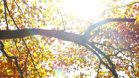 Tree branch  in a autumn forest. Tree branch  in the autumn forest stock footage