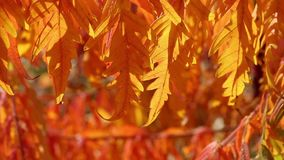 Tree branch  in a autumn forest. Tree branch  in the autumn forest stock video footage