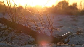 A tree branch and an axe lying nearby at a splendid sunset. An original view of a tree branch and an axe lying nearby on a sandy soil of the Black sea coast at a stock video footage