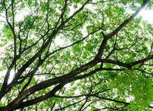 Tree branch background Stock Image