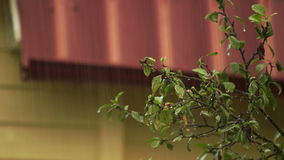 Tree branch on the background of the roof in the rain. Tree branch on the background of the roof in the rain in a countryside stock footage