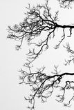 Tree branch backgrounds Royalty Free Stock Photography