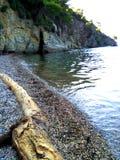 Tree branch on the beach. Beautiful sea in Chalkidiki, Greece royalty free stock photo