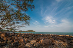 Tree branch on beach under blue sky at hin ngam beach Royalty Free Stock Images