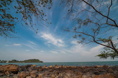 Tree branch on beach under blue sky at hin ngam beach Royalty Free Stock Photos