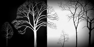 Tree branch on a  black and white background Stock Images