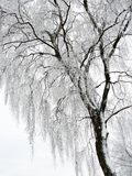 Tree, Branch, Black And White, Winter Royalty Free Stock Photography