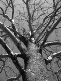 Tree, Branch, Black And White, Woody Plant Stock Photo