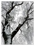 Tree, Branch, Black And White, Woody Plant Stock Photos