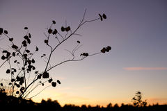A tree branch with a blue sky as dusk Royalty Free Stock Photography