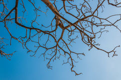 Tree branch with blue sky. Background Royalty Free Stock Photos