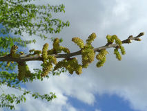 Tree branch. On blue sky background Stock Images