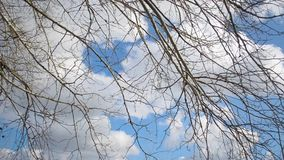 Tree branch on blue sky background, high in sky, flying white clouds illuminated by the sun. Tree branch on blue sky background, high in sky, flying white clouds stock video footage