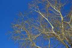 Tree branch on a blue sky background Royalty Free Stock Image