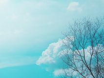 Tree branch in the blue sky background. Sky royalty free stock photo