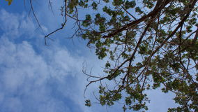 Tree branch with blue sky and cloud stock video footage
